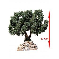 Arbre olivier N°3